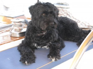 Rio at the helm of Bojangles