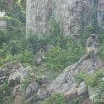 Some monkeys